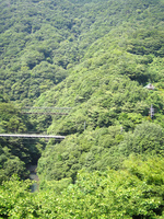 Hakone wooded valley